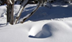 Albuquerque Blizzard-2006