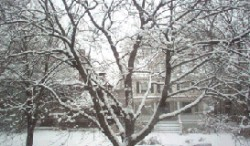 Oak Park Winter Scene