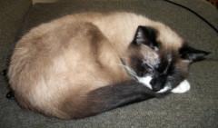 Twiggy-Sleeping